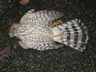 hawk-out